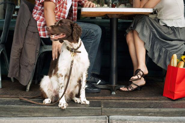 Z psem na kawę? Shutterstock