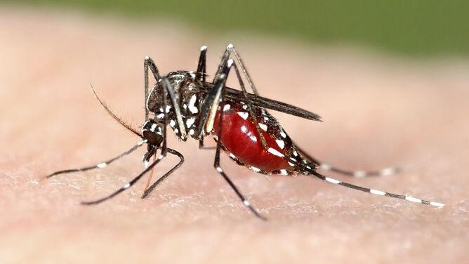 Władze Rzymu walczą z komarami. <br />Pomóc mają mieszkańcy miasta