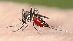 Władze Rzymu walczą z komarami. Pomóc mają mieszkańcy miasta