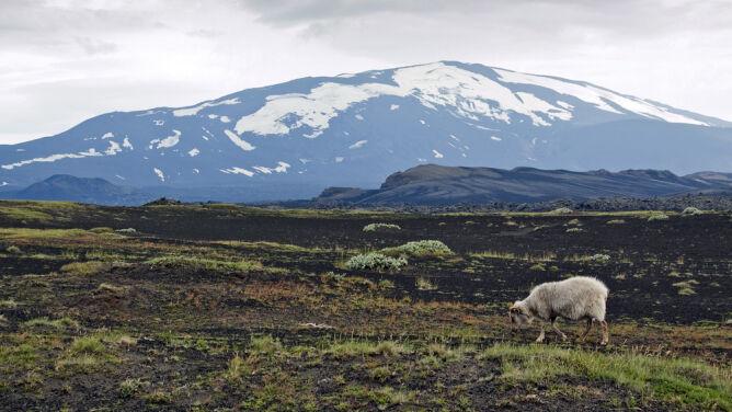 Wulkan Hekla bliski erupcji?